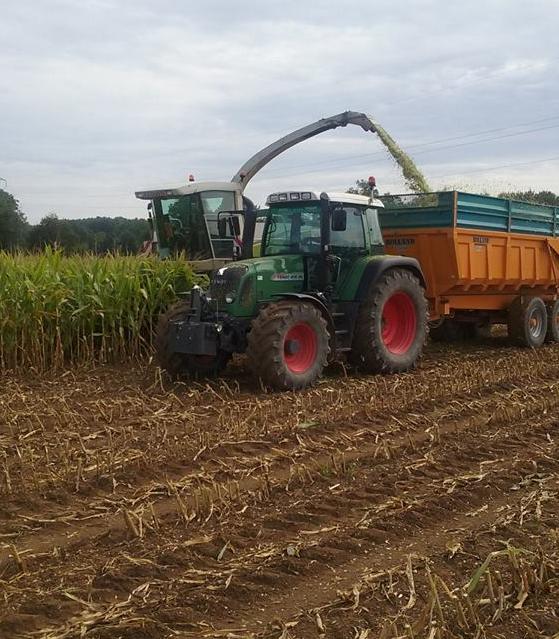 Recolte du maïs
